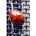 Ladybird Reflectionthursday rob hickey 2011