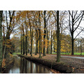 Series Almelo Autumn Nature Trees