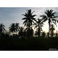 landscape nature thailand poulets 2007 sky silhouette sunrise morning