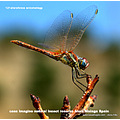 casaimagine insect reserve spain alora hills nature wild life helpx workaway uni