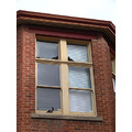 pigeons shelter wind window ceil perth littleollie