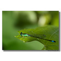 Ad JAnsen lelystad nature backyard vine insect dragonfly