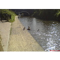 ducks bridge water canal coventry canalclub