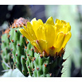 cactus spain water colourful foto alora flower andalucia home uk somerset
