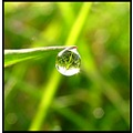 dew macro balis barbara reflection