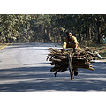 transport firewood dandeli karnataka india forest
