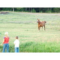 Horse in pasture with kids