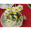 narcissus flower chinese newyear ftcomprat