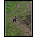 nature field path road bush rabbit ultrazoom