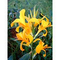 2009 portugal madeira santacruz under airport sport facility flowers yellow