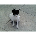 non comet such a lovely cat it is sporting BJK haha:)