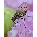 fly insect flower nature bug wings