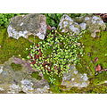 spring moss wildflowers green greenfph rocks