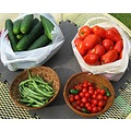 eggplant tomatoes peppers beans stringbeans vegetable gardening plants nature