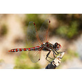 Dragon fly in Nevada taken with Nikon 18-200