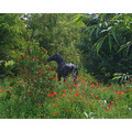 Bronze Horse on River Grant - Near Cambridge.