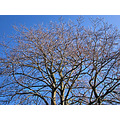 bluesky sky tree winter nature naturefph