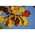 different colours in autum