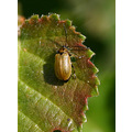 insect bug beatle