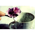 tea flower cafe fleur flor cattberry surrealisme alba alma keriz beauty