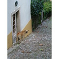 dog sintra house door
