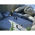 penguins boulders beach