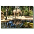 netherlands arnhem zoo elephant reflectionthursday nethx arnhx zoox animx elepx