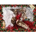 christmas baji burmese kitten pet family feline animal pet