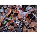 ice leaves puddle