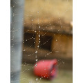 web webs webbing droplet drops water blobs thread fine blured glisten glistening
