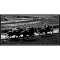 horse race bw sport action abstract