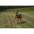 Animal dog HuntingDog HungarianVizsla Vizsla Alvaro proud toy outside