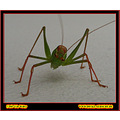 insect animal bug green macro