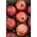 sunshinestate miamibeach florida pomegranate fruit