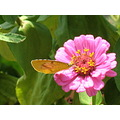 Beautiful butterfly beautiful flower - some of God's special creation - gifts to a human kind.