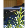 urban wildlife dragonfly insect animal