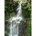 waterfall scenery nature water bush