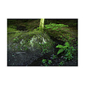 forest Brzsny mountain stream nature landscape
