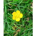 Flower Nature Yellow