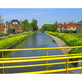 yellow flowers bridge stadskanaal