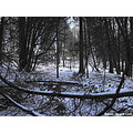 winter snow snowfall nature scenery woods tree snow covered