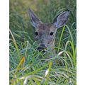 wilderness manitoba pinawa nature landscape animals deer