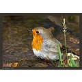 Ain't I cute... ? :-)