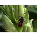 green spring insect