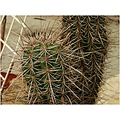 cactus plant sharp garden nature
