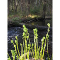 nature water fern plant