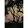 sunset Australia bush wangi