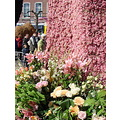 Holland Haarlem flowers