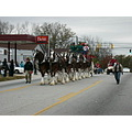 2005 CHRISTMAS PARADE BUDWIESER CLIDESDELL HORSES