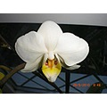 orchid orchids flower flowers